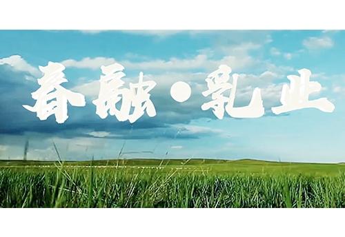 《春融乳业宣传片》
